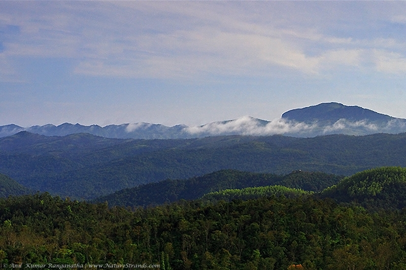 anilkr_mountainranges_coorg