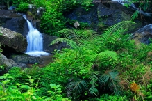 anilkr_stream_in_jungle